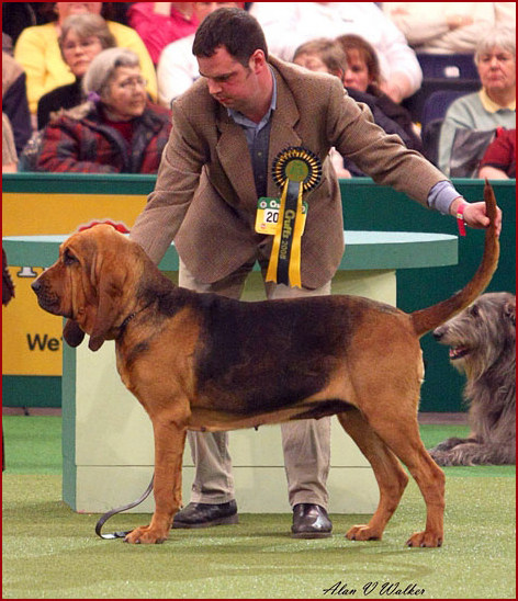 crufts group